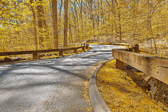 Gold Forest Road. Winding road scenery from Rock Creek Park in Washington DC, USA. HDR composite from multiple exposures processed with vibrant yellow colors in royalty free stock photo
