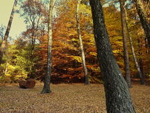 Gold forest royalty free stock images