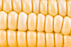 Gold fresh Corn Stock Photo