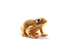 Gold frog Stock Photo