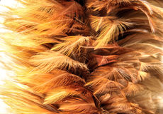 gold fur from feather Stock Photo
