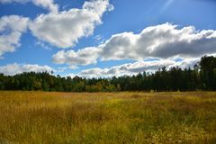 Gold glade, in the middle of the forest royalty free stock image