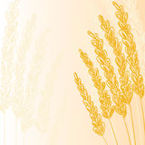 Gold grain background Stock Photo