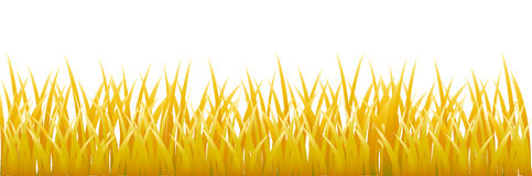 Gold grass Royalty Free Stock Image