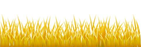 Gold grass stock illustration