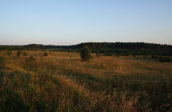 Gold grass meadow on Polish Masuria (Mazury). Meadow, grassland in gold colour during early sunset on Polish Masuria / Mazury stock photos