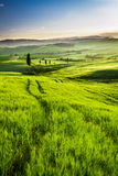 Gold and green fields in the valley at sunset, Tuscany stock images