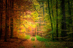 Gold and green path in the forest, Europe Stock Photo