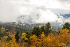 Gold and green trees covered by low cloud cover. stock images