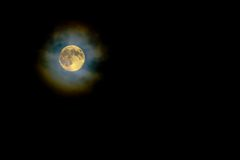 Gold Harvest Moon through High Light Clouds Royalty Free Stock Photography