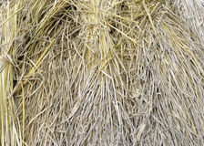 Dried hay texture close up shot Stock Photography