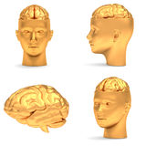 Gold head in projections. Gold head in three projections and brain,  over white Royalty Free Stock Photo