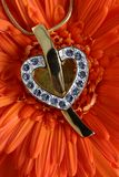Gold heart pendant Stock Images