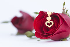 Gold heart pendant and red rose. On white background stock image