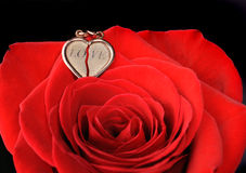 Gold heart in a red rose Royalty Free Stock Photo