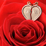 Gold heart in a red rose Stock Image