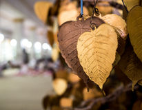 Gold heart shape leaves Stock Images