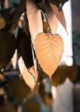 Gold heart shape leaves Stock Image