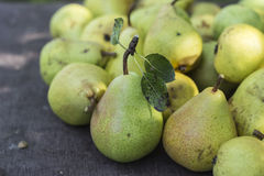 Gold heat. Pears from the home garden stock images