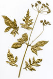 Gold herbarium Stock Images