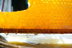 Gold honeycombs full of honey Royalty Free Stock Photography