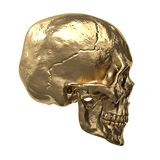 Gold human skull, isolated on white background. 3d Royalty Free Stock Image