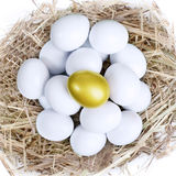Gold investment eggs nest Stock Image