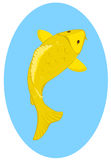 Gold koi. Gold Japanese koi on blue oval background Stock Photography