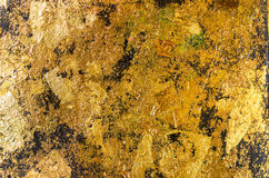 The gold leaf. Royalty Free Stock Image