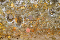 Gold leaf Royalty Free Stock Images