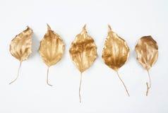 Golden leaf design elements. Decoration elements for invitation, wedding cards, valentines day, greeting cards. Isolated. Gold leaf design elements. Decoration Stock Image