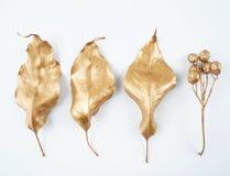 Golden leaf and fruit design elements. Decoration elements for invitation, wedding cards, valentines day, greeting cards. Isolated. Gold leaf and fruit design Stock Photo