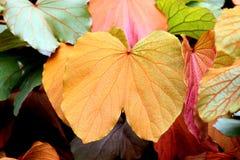 Gold leaf in the garden. Stock Photos