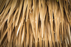 Gold leaves of palm. Stock Photo