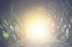 Gold light at the end of the tunnel of trees - concept hope. Royalty Free Stock Photos