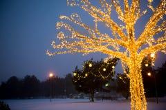 Gold lights Christmas Tree Stock Photography
