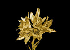 Gold lily Royalty Free Stock Photography