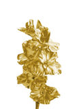 Gold lily Stock Photo