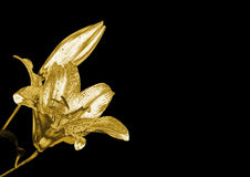 Gold lily Royalty Free Stock Image