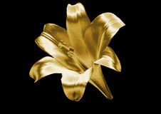 Gold lily Royalty Free Stock Images