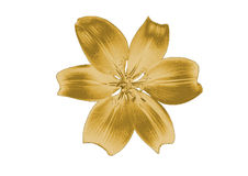 Gold lily Stock Image