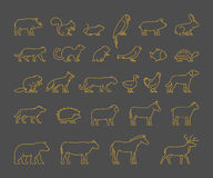 Gold line set of domestic, farm and wild animals. Line silhouettes animals isolated. Outline farm and wild animals. Icon cow, bear, beaver, sheep, chicken and Stock Images