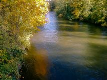 Gold lined fall river. Gold lined autumn river below trees and bushes Royalty Free Stock Photography