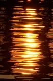 gold liquid Στοκ Εικόνα