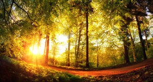 Gold lit forest path at sunset Royalty Free Stock Images
