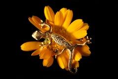 Gold Lizard Stock Image