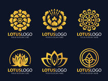 Gold Lotus logo vector art set design Stock Images