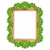Gold luxury Louise and green leaves around of photo frame isolated background Royalty Free Stock Images