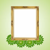 Gold luxury Louise and green leaves around of photo frame isolated background Stock Photos