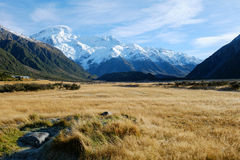 Gold Meadow with Mount Sefton Backdrop Stock Photo